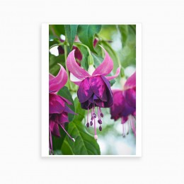 Duvar  İçin Resim Mor Renli Çiçekler  35x25 cm