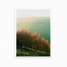Duvar  İçin Resim Yeşil Ormadan Detay 35x25 cm