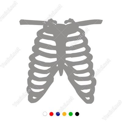 Anatomi Deseni Üst Eğe Kemikleri Kalp Boşluğu Sticker