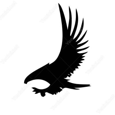 Sert Ve Hızlı Uçan Avcı Kartal Kuş Siticker